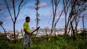 Guayaneses siembran conucos en la ciudad para paliar la crisis alimentaria