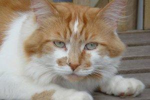 Murió Rubble, el gato más viejo del mundo