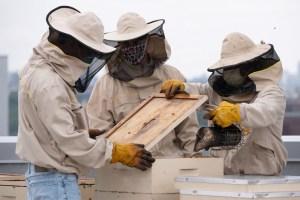 Hospital de El Bronx tiene 250 mil abejas en su techo, tanto así que venderán miel