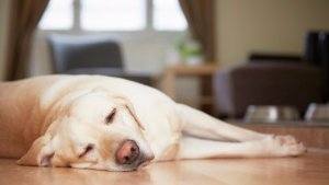 ¿Qué edad tiene mi perro? Nuevo estudio desmintió que un año canino sean siete de un humano
