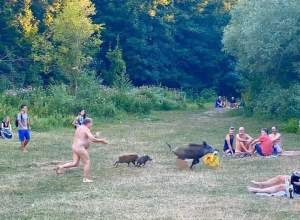 VIRAL: El hilarante momento en que un nudista corre tras un jabalí que robó su computadora (FOTOS)