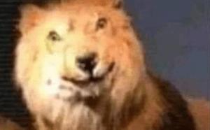 """¿Cómo dijo? Este es el origen del meme de moda, """"león gringo confundido"""""""
