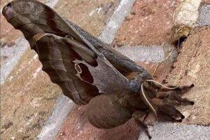 """La verdad detrás de las """"tarántulas con alas"""" que se viralizaron en redes"""