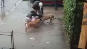 El terrorífico momento en que una madre se enfrenta al pitbull que atacaba a su hija en plena calle