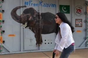 Elefante que pasó más de 35 años solo llegó a su nuevo hogar en Camboya y fue recibido por Cher