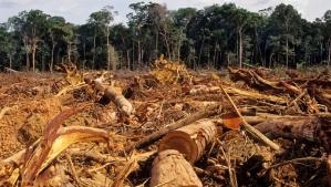 Blinken anunció pacto contra la deforestación en la Amazonía