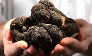 ¡COSTOSA! Los misterios de la trufa negra, el diamante de la gastronomía (Video)