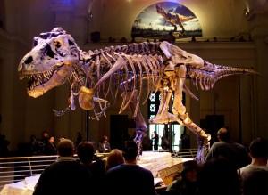 ¿Crecimiento pausado o súbito estirón? Cómo se desarrollaba un dinosaurio feroz