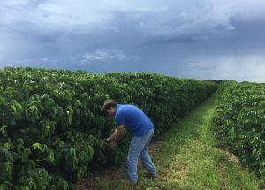 Repunte del precio del café se volverá 'violento' ante pérdidas de cosechas en Brasil