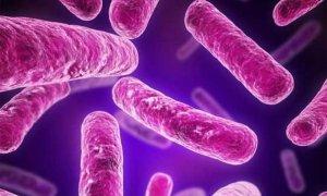 Estudio en monos avala la validez de una nueva vacuna contra la tuberculosis