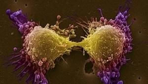 Descifran un mecanismo celular responsable de frenar el crecimiento tumoral