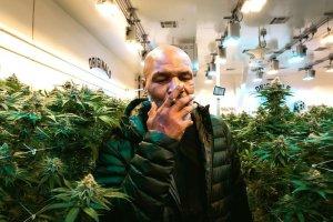 La impactante cantidad de dinero que gana Mike Tyson por la venta de marihuana mensual