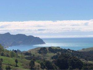 Llegaron las primeras olas del tsunami a zona norte de Nueva Zelanda (VIDEOS)