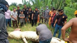Un cocodrilo se traga a un niño de 8 años, los vecinos matan al reptil y extraen el cuerpo intacto del menor (Video)