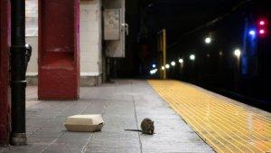 Neoyorquinos se quejan por el aumento de ratas en la ciudad