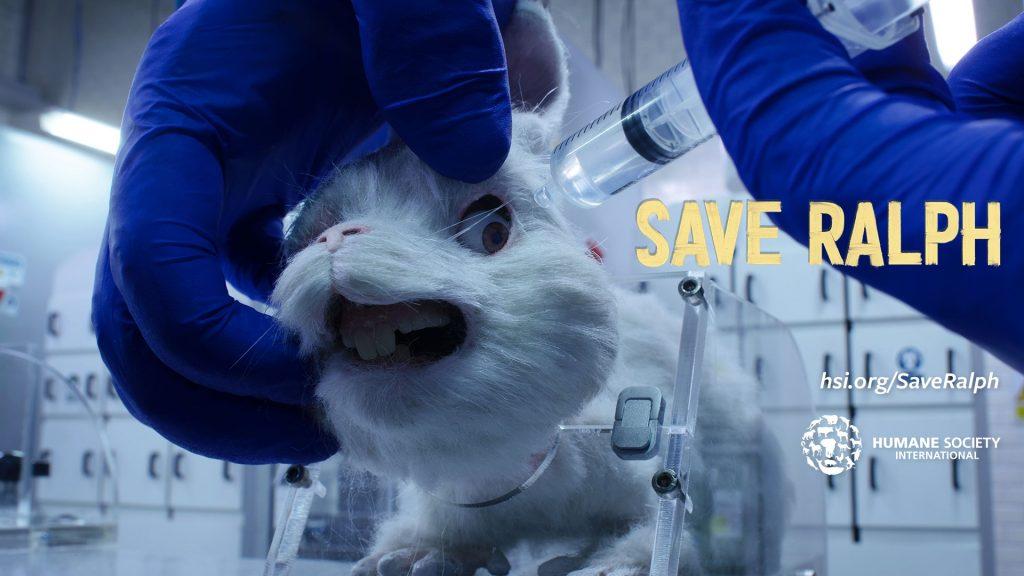 """Save Ralph"""": La campaña en contra del maltrato animal que conmovió a todos en las redes - LaPatilla.com"""