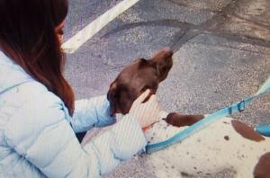 Periodista informaba el robo de un perro y en pleno reportaje atrapó al culpable