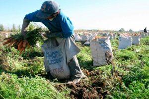 Escasez de diésel en Venezuela retrasa ciclo de siembra de invierno, el más importante del año