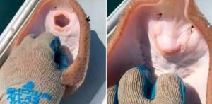 """La cruel realidad detrás del VIDEO de un pez raya """"riendo"""" por las cosquillas de un pescador"""