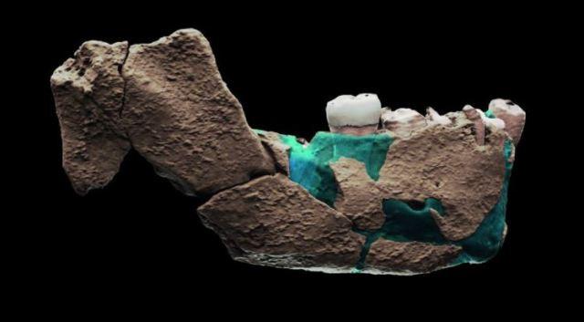 Nuevo hallazgo en Israel podría reconfigurar la historia de la evolución  humana