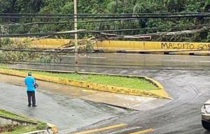 Reportaron caída de un árbol en la carretera Panamericana tras lluvias este #28Jul