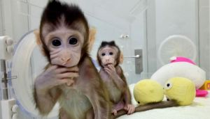 Virus del mono B: Qué se sabe de esta peligrosa enfermedad que ya causó una muerte en China