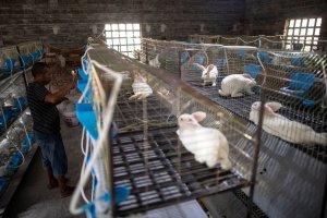 Descubrir el origen del coronavirus queda cada vez más lejos: El régimen chino mató a todos los animales que podían ser analizados