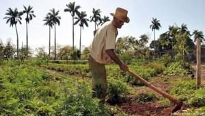 El desplome de la actividad agropecuaria en Cuba