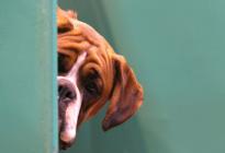 Un interesante análisis: Los perros hablan, diferencian sus ladridos y gruñidos como forma de su expresión vocal