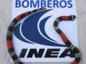 ¡Preocupante! Aumentan los casos por mordeduras de serpientes en Guárico