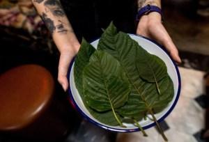 Kratom, la planta estimulante que reemplazó al alcohol en los bares de Bangkok por la ley seca