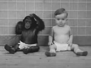 Pareja crió a su bebé junto a una chimpancé para comprobar si desarrollaban la misma inteligencia