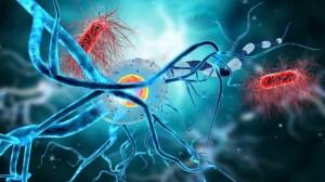Estudio reveló que el cerebro humano puede generar neuronas hasta los 90 años