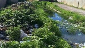 Escasez de combustible e insecticida favorece repunte de casos de paludismo en Cumaná